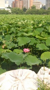 上野不忍池 一番咲き